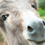 If Balaam Was Nigerian (And His Donkey Talked)